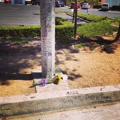 Visiting Paul walker crash site