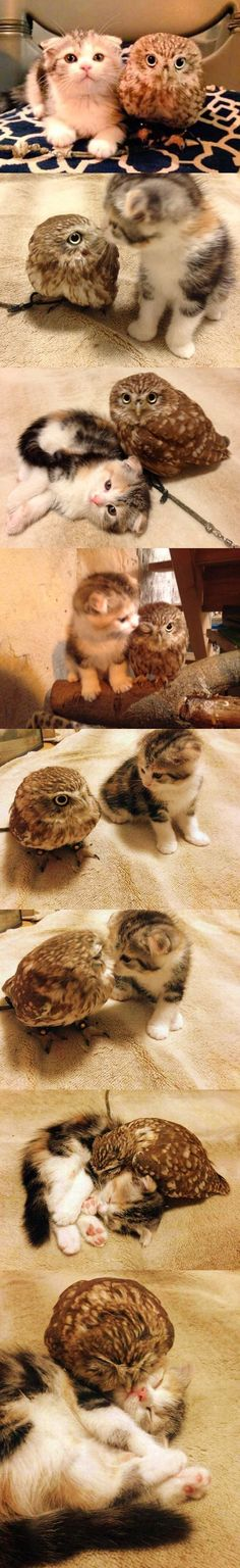 Bilder, die beweisen: Diese Katze und Eule sind Freunde fürs Leben | Webfail - Fail Bilder und Fail Videos