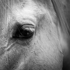 Black and white horse photography 5x5 print  by mylittlepixels