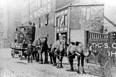 """1914-1918: Zoo animals supporting the war effort """"With many of Sheffield horses conscripted by the military he had an increasingly difficult time to match supply with demand. Lizzie the Elephant was brought in as a solution to this problem. Drafted in from Sedgwick's Menagerie, the elephant became a familiar sight carrying goods around the city. She inspired other Sheffield firms and a company used camels also from Sedgwick's Menagerie in place of their own horses."""""""