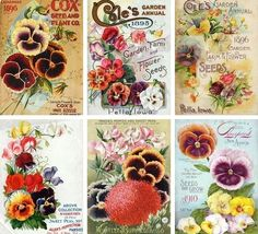 Printable vintage seed packets. - framing a few for baby girls room!