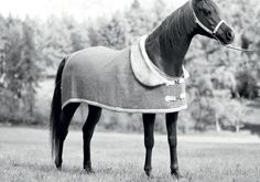 Your horse can have a nice collar too! - Manifattura Valor