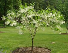 The Flowering Collection Archives - Faux Trees N' Shrubs Flowering Shade Plants, Partial Shade Plants, Flowering Trees, Garden Shrubs, Garden Trees, Shade Garden, Trees And Shrubs, Trees To Plant, Outdoor Plants