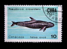 Falsa orca, stamp printed by Cuba 1984
