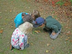 outdoor classrooms allows for children to be able to explore different animals and creatures in their natural environment and habitat