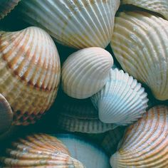 Seashells that wash up on the shore come from a netherworld where ocean meets land. Because of the Moon's influence on the tides, these seashells hold the energy of the Moon goddess. Many shells, p…