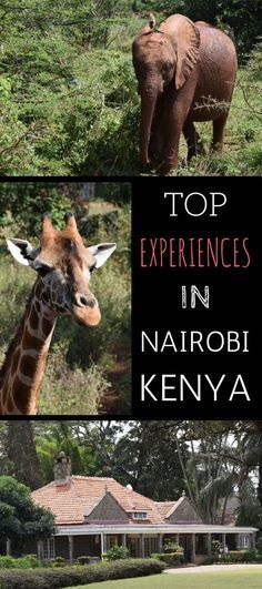 A guide to the top experiences in Nairobi Kenya. This post details all the main attractions and also provides a full 1 day itinerary from our trip to Nairobi.