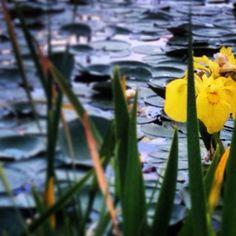 Yellow//