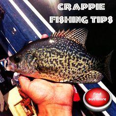Crappie fishing tips #crappie #fishing #tips                                                                                                                                                                                 More