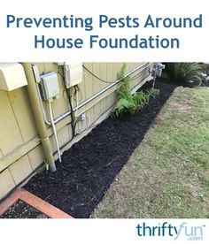 """""""On a recent visit from our pest company, they mentioned that we really need a plant free border around our house. Plants that touch the side of your house allow bugs to get past the pest spray. Types Of Bugs, Types Of Insects, Pest Spray, House Foundation, Bees And Wasps, Garden Guide, Garden Ideas, Humming Bird Feeders, Natural Garden"""