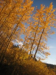 Get out and enjoy the fall colors this weekend with a Tahoe Rim Hike at Spooner Lake