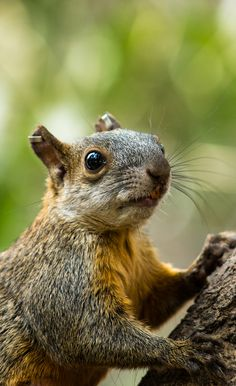 funny squirrel ...........click here to find out more http://googydog.com