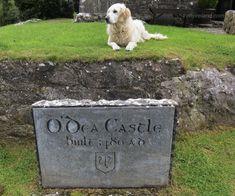 O'Dea castle - County Clare