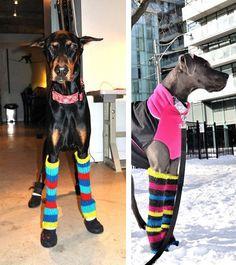 doggie legwarmers! teehee Sadie would need little bitty ones :)