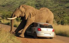 An elephant in South Africa scratched an itch at the expense of a car.  Photo by Armand Grobler Photography.