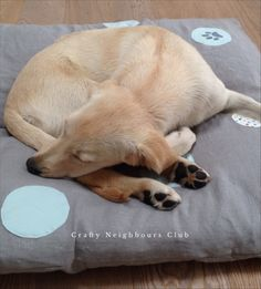 Crafty for my dog - Anleitung für ein selbstgenähtes Hundekissen i, Pünktchendesign