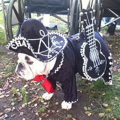 Dog Halloween Costume: Mariachi Player < Pet Halloween Costumes - Southern Living Order your Skinny Fiber today at http://patriciaeberhard68.eatlessfeelfull.com/  Follow me on my Facebook Group for more healthy tips, exercise tips, healthy eating, and living ideas at  https://www.facebook.com/groups/EatingHealthyandLivingwithPatricia/?SOURCE=PIN