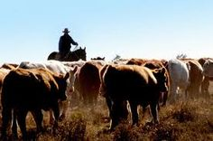 Constant drought conditions, lack of space, poor weather conditions, and skyrocketing animal feed prices have made livestock farmers to sell their herds. We have a solution. Contact us - http://livestockforagesolution.com