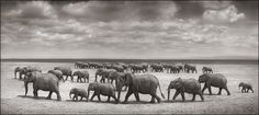 Elephants Crossing Lake Bed in Sun, Amboseli 2008 Nick Brandt