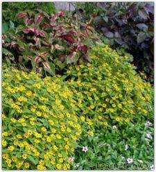 Heat-loving outdoor plants