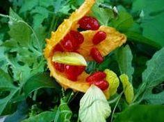 Descobriram uma Planta que Mata até 98% de Células Cancerígenas e Ajuda a Acabar com a Diabetes | Saúde Curiosa