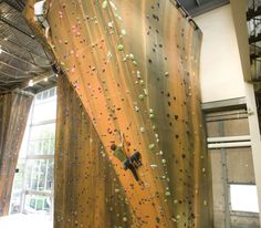 Working against gravity - Utah's Largest Lead Climbing Gym - Momentum Climbing Lead Climbing, Indoor Climbing, Working Against Gravity, Bouldering, This Is Us, Healthy Lifestyle, Walls, Action, Gym
