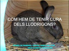 Bon projectes #PBL sobre animals.