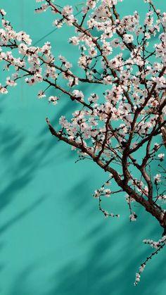 Frühling Wallpaper, Nature Iphone Wallpaper, Flower Background Wallpaper, Flower Phone Wallpaper, Cellphone Wallpaper, Disney Wallpaper, Pretty Backgrounds, Pretty Wallpapers, Flower Backgrounds