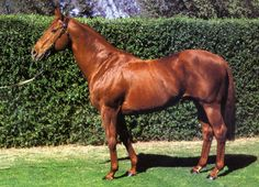 Biscay, (AUS) 1965 (Star Kingdom-Magic Symbol), Starts 8: 6-0-0, sire of Bletchingly & grandsire of the great champion Kingston Town (Timeform: 137)