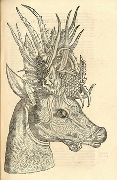Woodcut illustrations from Aldrovandi's 'History of Monsters'