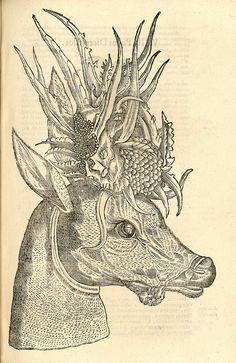 Capreolus Polyceros, Woodcut illustrations from Aldrovandi's 'History of Monsters', 1642; full book here: http://hos.ou.edu/galleries/16thCentury/Aldrovandi/1570/