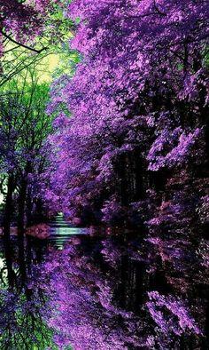 Doğada Eflatun Mor Güzellikleri... ❤