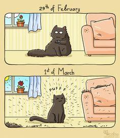 The one about spring (Catsu The Cat - Comics) Cute Cats, Funny Cats, Funny Animals, Cute Animals, Crazy Cat Lady, Crazy Cats, Catsu The Cat, Amor Animal, Simons Cat