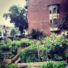 Community Garden // South End, Boston