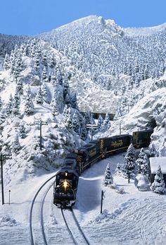 Snowy Pinecliffe | b