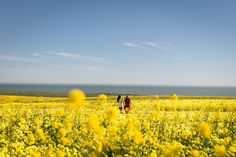 Fine Art Photography, Landscape PhotographyFebruary 16, 2016 mustard fields By Kristin Dokoza