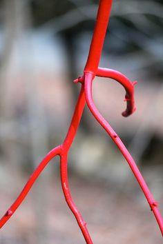 Dancing Stick DIY Tutorial by Ashbee Design