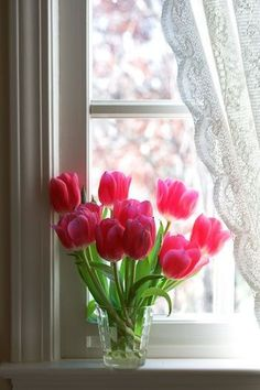Pink tulips by the window