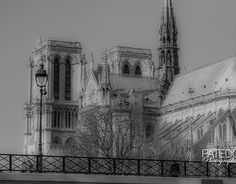 """Check out new work on my @Behance portfolio: """"Paris, Cathédrale Notre-Dame."""" http://be.net/gallery/48359983/Paris-Cathdrale-Notre-Dame"""