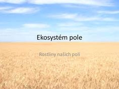Ekosystém pole Rostliny našich polí.> Biology
