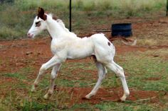 I have always wanted to raise and train my own foal :) <3