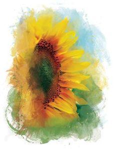 i luv sunflowers <3