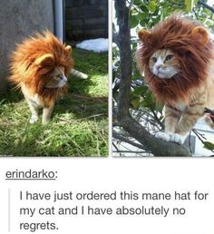 oh my gosh. hahah might have to buy a cat and a hat ha ha ha