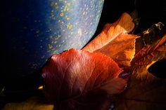 Fall Foliage Still Life Photograph
