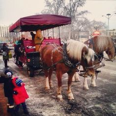 Sleigh Rides in support of the Schizophrenia Society of Alberta. Your donations make a different! Sleigh Rides, Schizophrenia, Horses, Blog, Animals, Animales, Animaux, Horse, Blogging