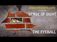 ▶ The Sense of Sight - How the Body Works | Mocomi Kids - YouTube