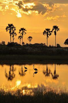 Okavango Sunrise Flamingos by Coopertje 2 via Flickr