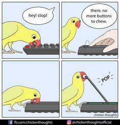 Animal Jokes, Funny Animal Memes, Funny Animal Videos, Funny Animal Pictures, Cute Funny Animals, Stupid Funny Memes, Funny Cute, Funny Birds, Cute Birds