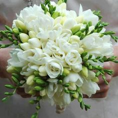 Sweet white freesia make for a beautiful bouquet! Freesia are fragrant and provide wonderful color. Shop freesia in a variety of eye-catching colors a. Freesia Wedding Bouquet, Freesia Flowers, White Wedding Bouquets, Bride Bouquets, Floral Wedding, Flower Bouquets, Purple Bouquets, Purple Wedding, Orchid Bridal Bouquets
