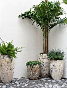 Great ideas for garden terrace design vines - Deko, DIY & Lifestyle - Terrasse Balcony Garden, Garden Planters, Planter Pots, Concrete Planters, Garden Trellis, Cement Pots, Indoor Palms, Indoor Flowers, Plantas Indoor